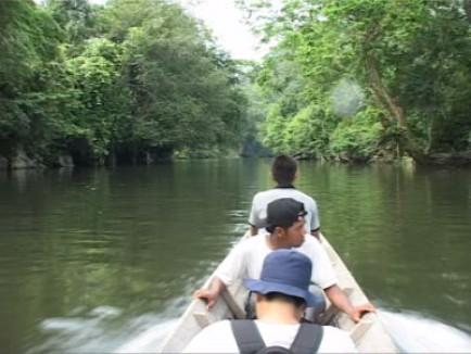 kalimantan tours, wildlife, tour, tours, borneo, jungle, hike, trail, forest, dayak, trip, safari, longhouse