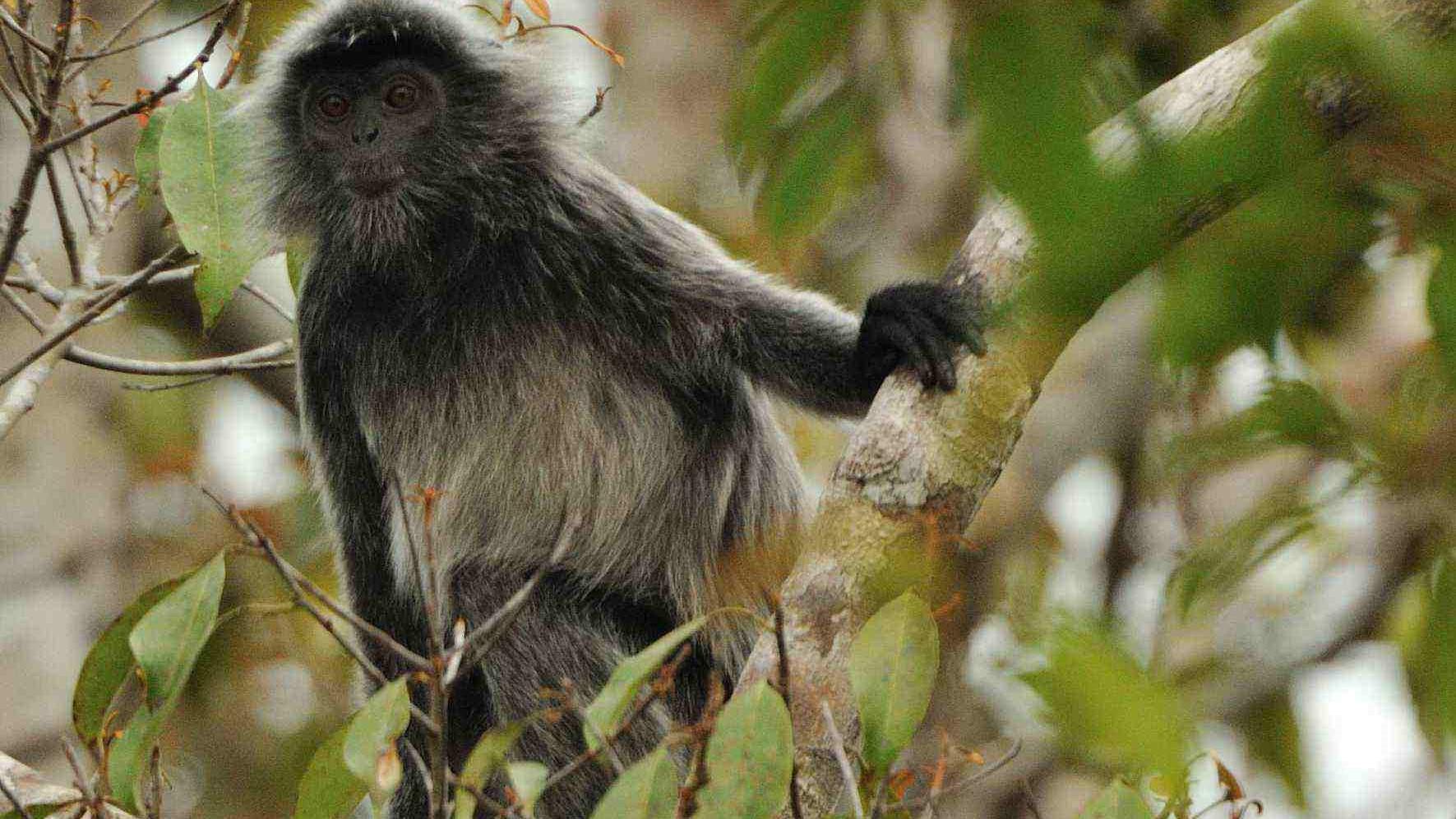 tanjung puting, orangutan, wildlife safari, tour, trip guide, klotok boat cruise jungle