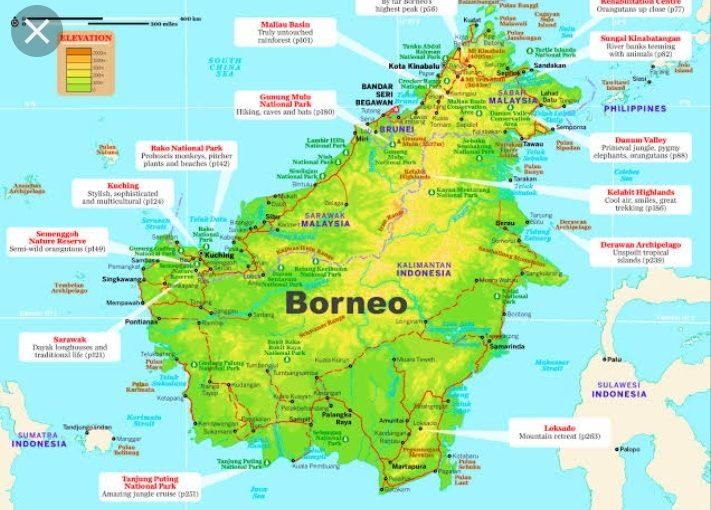 borneo, kalimantan, tanjung puting, orangutan, wildlife safari, tour, trip guide, klotok boat cruise jungle, beach, dive snorkel