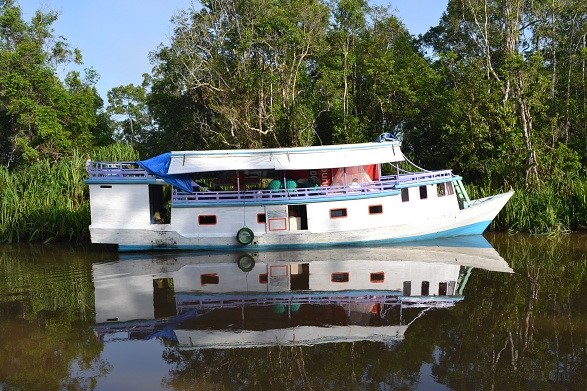 klotok boat cruise sekonyer river tanjung puting wildlife safari kalimantan tour
