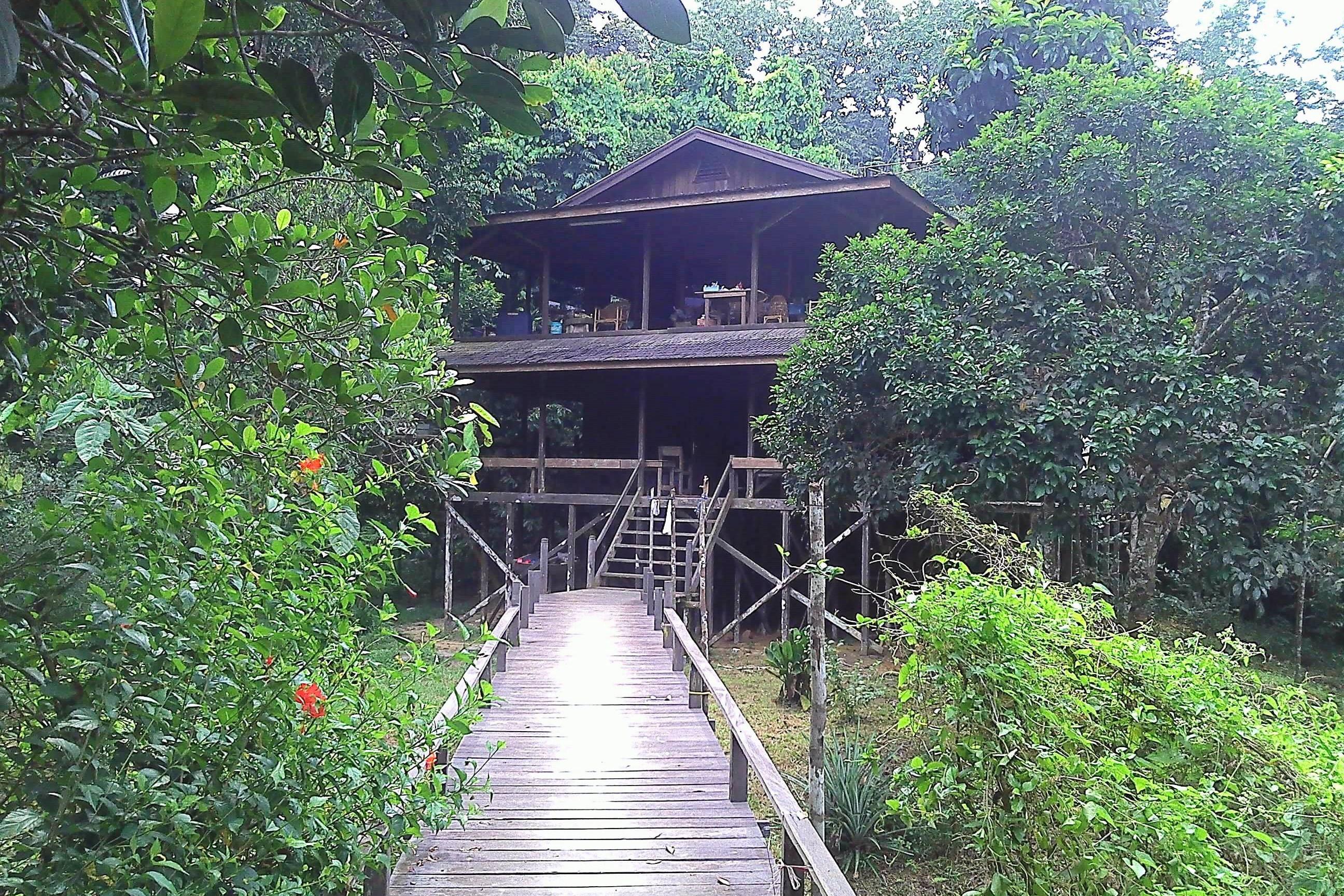 kutai park miau baru dayak village tour guide orangutan safari rain forest borneo