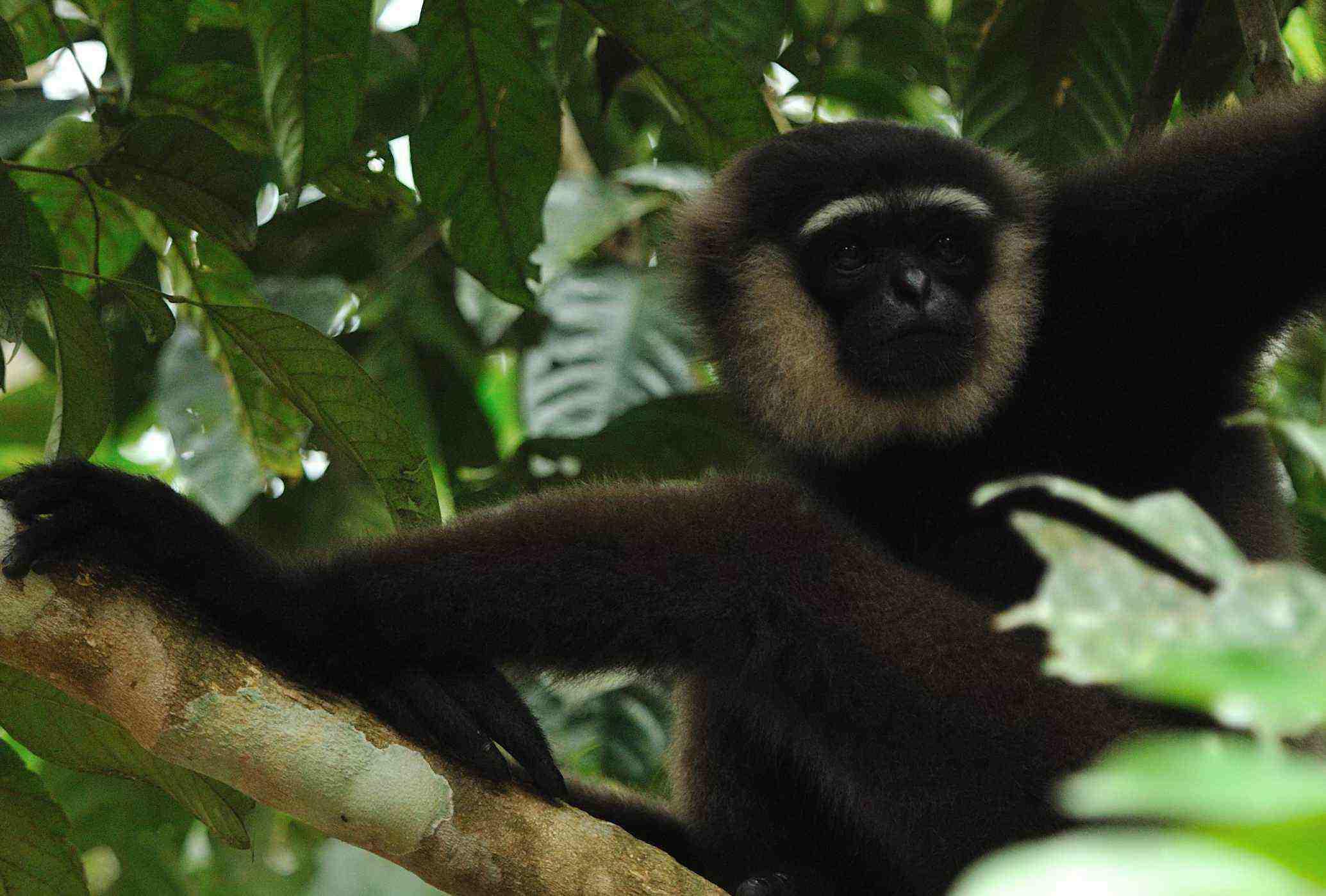 sebangau jungle rain forest orangutan wildlife safari trip