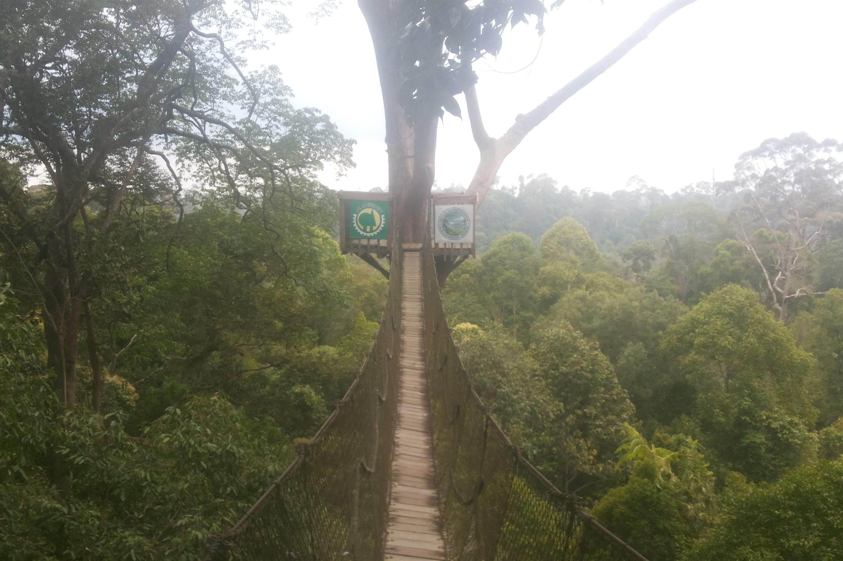 balikpapan orangutan bukit bankirai jungle samboja rain forest, proboscis monkey sail mangrove forest borneo tours